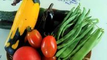 自家農園夏野菜
