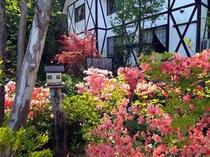 ポンドテェイル・ガーデンのツツジ風景