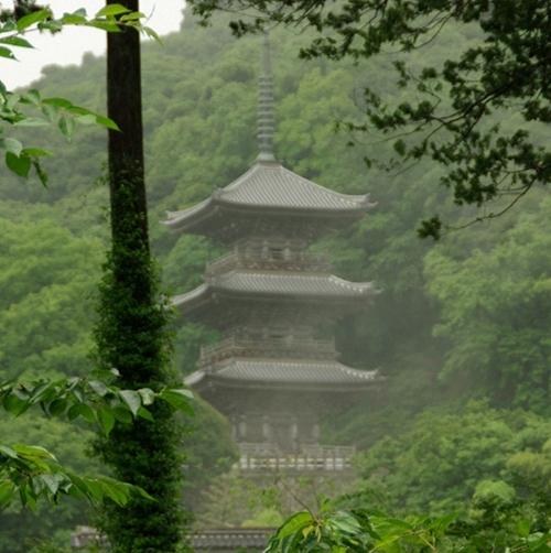 霧雨に煙る三重塔