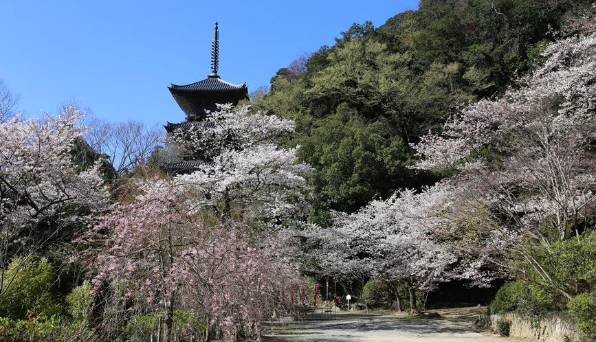 清水寺三重の塔(春)