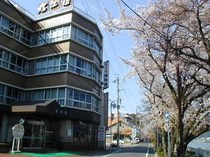 玄関前の桜 4月上旬