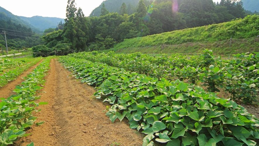 ■自家栽培の野菜たち 料理のこだわりは食材のこだわりにあり。手塩をかけ、育てます。
