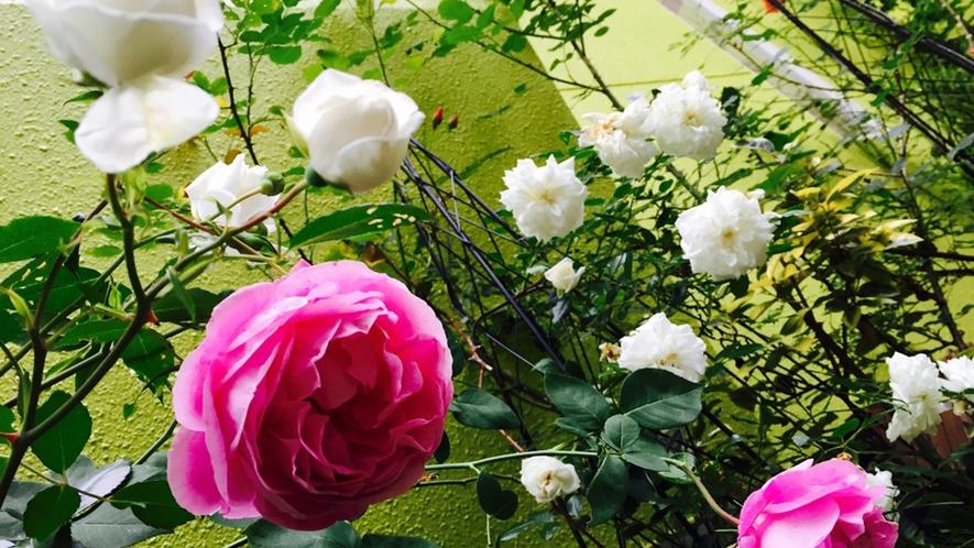四季折々の緑や花がお出迎え☆彡