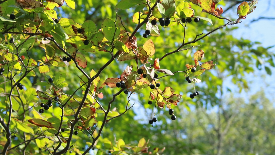 陽が差すと木漏れ日が心地良い秋です!