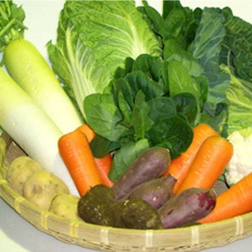 三島野菜色々