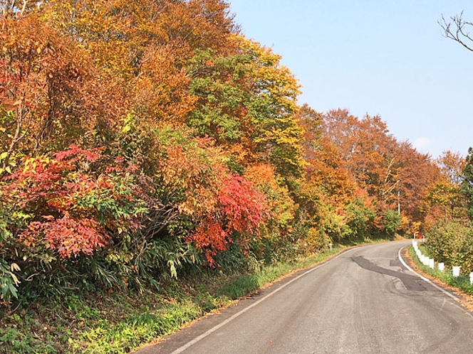魚沼スカイラインの紅葉