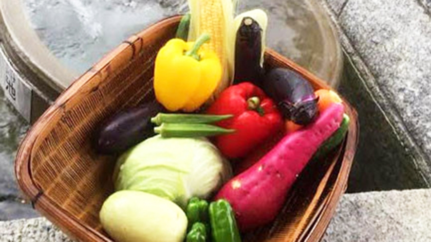 ・高島の新鮮なお野菜たち。おいしいですよ♪