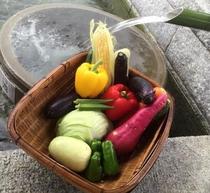 高島の新鮮な野菜