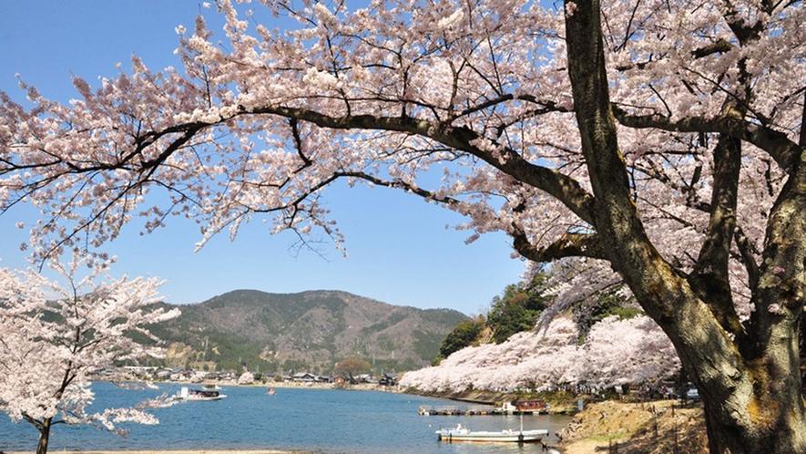 ・桜と琵琶湖が一緒に楽しめます。桜の時期にもぜひお越しください