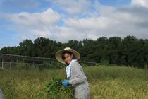 農業体験 2
