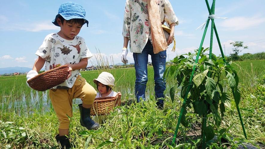 ・子供の頃の農業体験は食育にもつながります