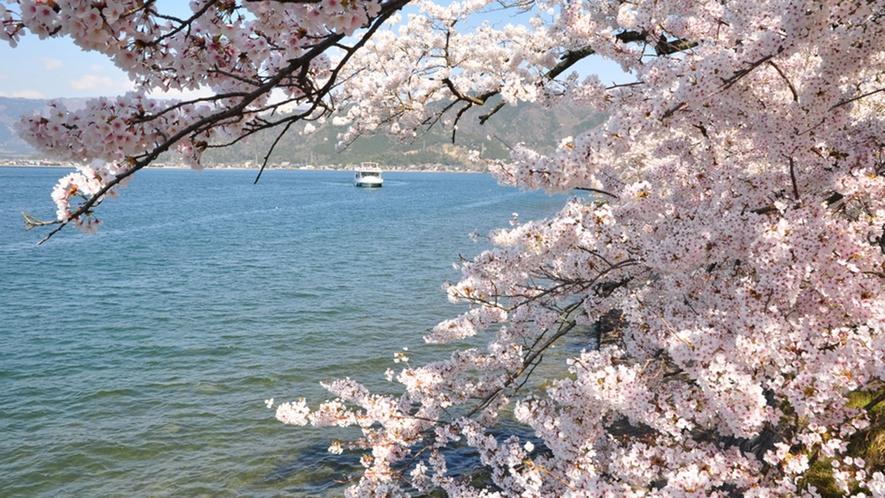 ・海津大崎 桜で有名な風光明媚な半島です