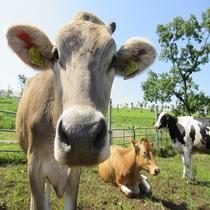 ミルク牧場