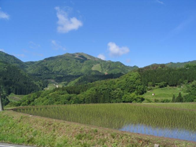 鉢伏山田植え時期