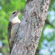 *【周辺】数多くの小鳥のさえずりが心地よく響き渡ります。