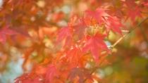 *秋の季節(イメージ)