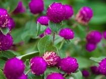 中庭の季節の花々