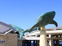 美ら海水族館【車で約55分】ジンベイザメやさまざまな魚たちが待ってます