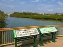 【周辺情報】億首川からマングローブを望む風景