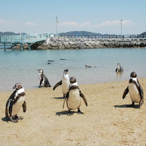 【長崎ペンギン水族館】当館から車で約30分!目の前で自然の海に飛び込むペンギンの姿は見ものですよ★!