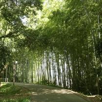 【鈴熊山公園(鈴熊寺)】遊歩道 車で5分