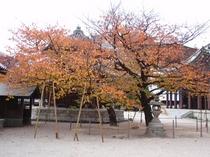 東長寺の紅葉