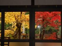 部屋からの紅葉