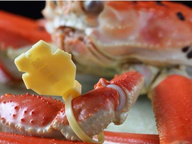 ■越前ガニの証■100%地元産タグ付ブランド蟹