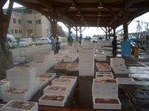 越前の美味しいお魚をいろんな地域の市場に卸しています