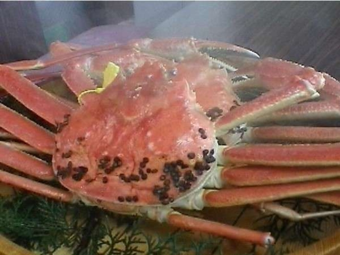 【越前蟹】召し上がりいただく前に生きていた蟹を茹で上げるので、現地じゃないと食べられない贅沢です