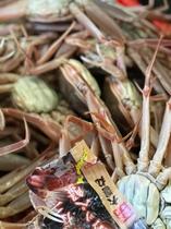 浅茂川漁港で水揚げされる大前丸の大前がに