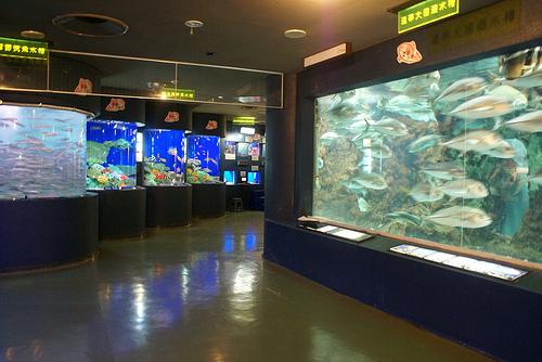 大回遊水槽の魚達にエサをあげる、ダイバー餌付けショーもあります