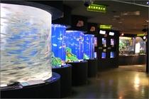 熱帯魚、ウミガメ、テッポウウオなど、たくさんの海のお友達に会えます