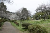 【湯田川の梅林公園】