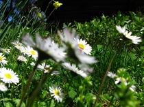お庭の花々