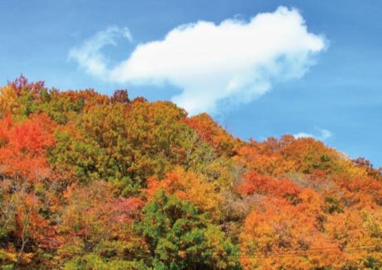 紅葉の秋お出かけはお早めに アーリーアウトプラン【9時までにチェックアウト】