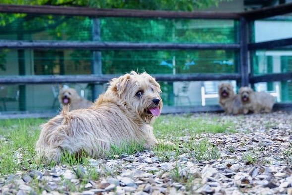 【楽天限定】愛犬と満天の星空を見よう♪スタンダードプラン【ファミリー】【ペット同伴可】