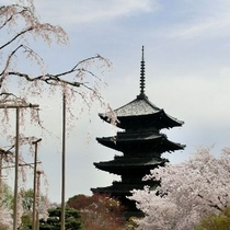 <春の東寺>