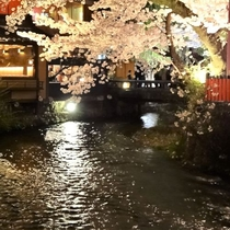 <祇園の夜桜>