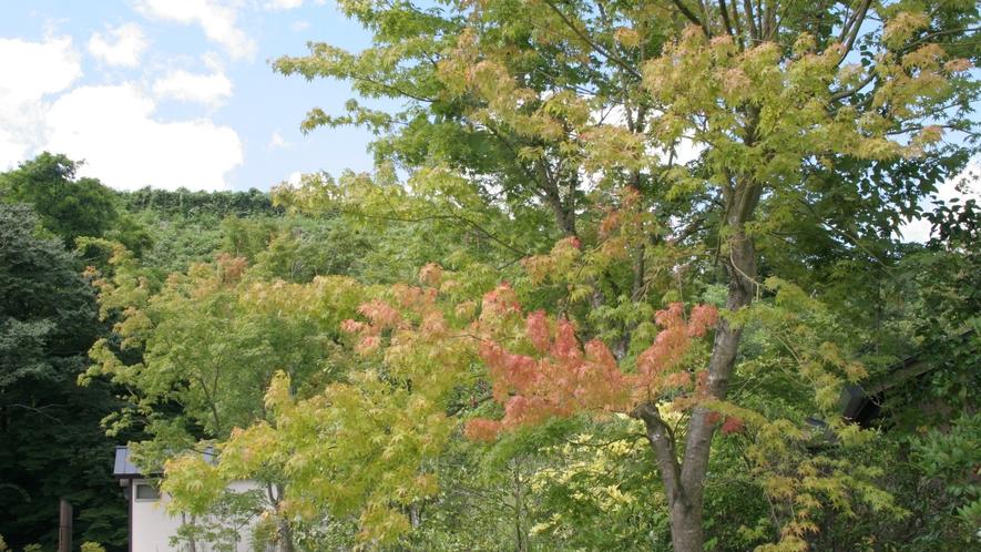 紅葉が色づき始めました。彩り華やかな秋の訪れです。