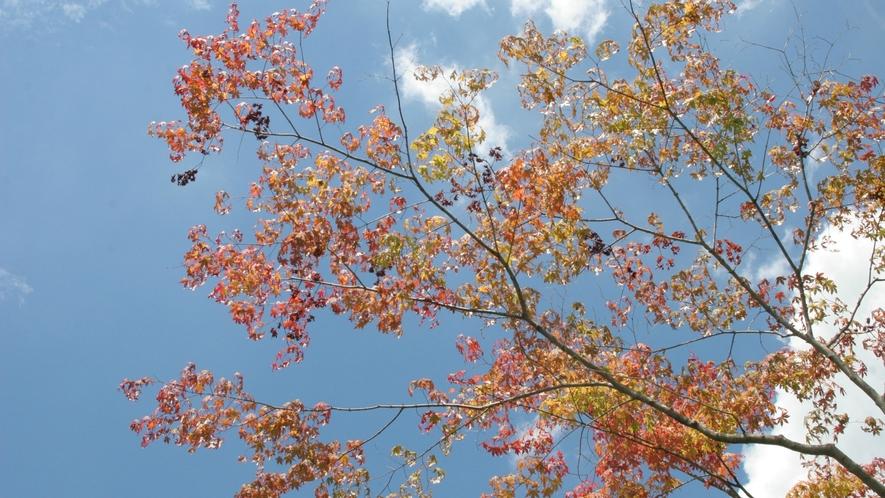 秋空に紅葉の移り変わりが映えて美しい景色をお楽しみいただけます。