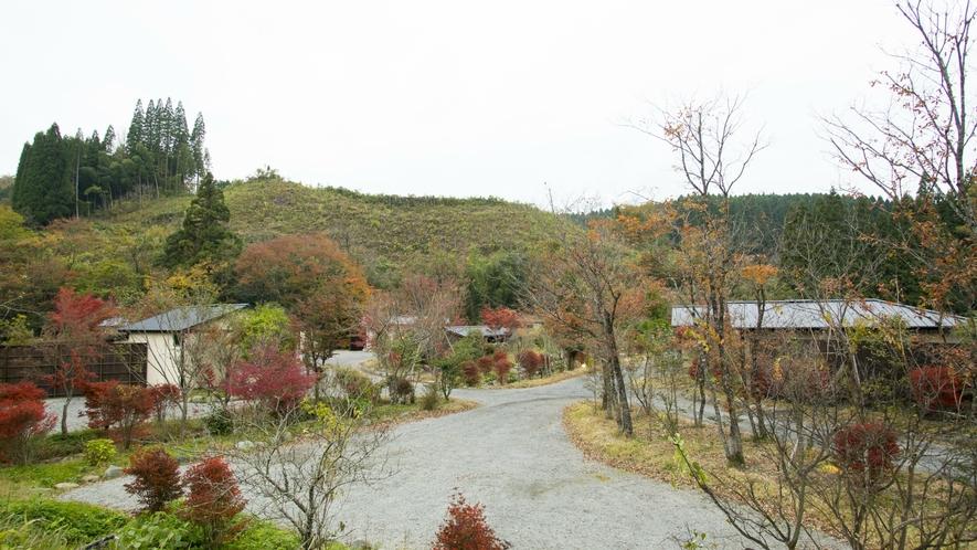 秋の紅葉。四季折々の彩りと故郷の懐かしい風景。