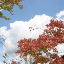 紅葉シーズン到来です。