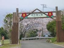 【周辺】天草大江 西平椿公園(椿、桜、東シナ海にある大ケ瀬 2017年4月12日)