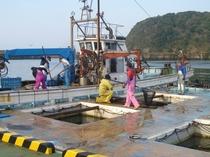 大江漁港の風景(平野屋旅館・食事処「辨」から150メートル)