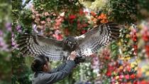 花と鳥の別天地 富士花鳥園