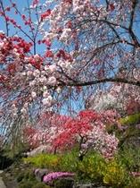 善勝寺の花々