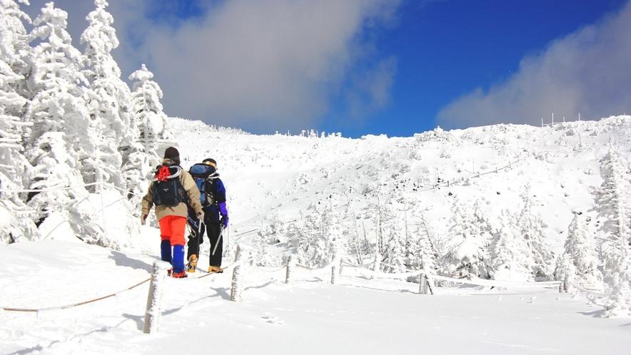 ★冬の北八ヶ岳坪庭。抜けるような青空のもと樹氷の林を歩く。