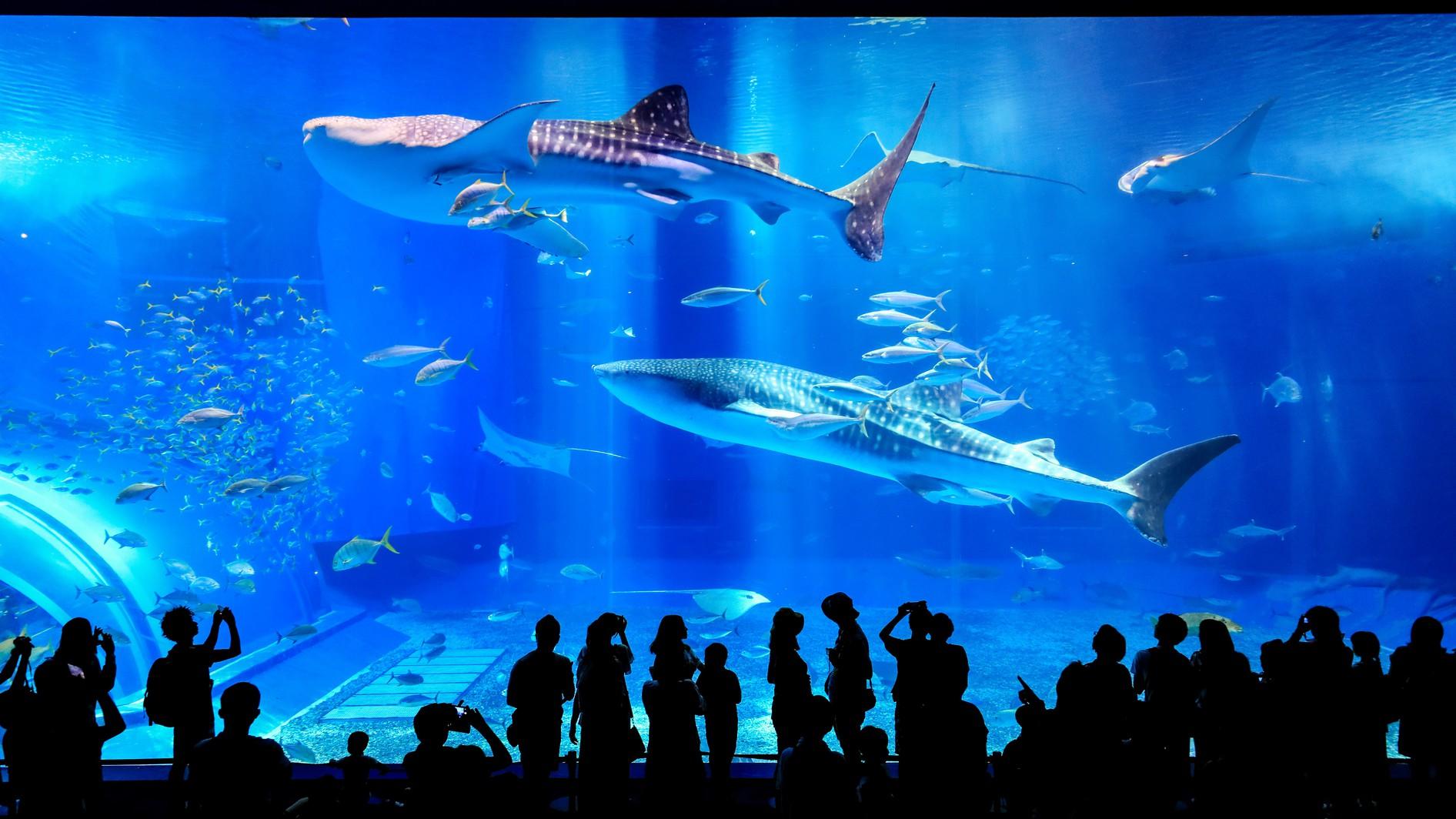国営沖縄記念公園(海洋博公園)・沖縄美ら海水族館1(緊急事態宣言中は休館)