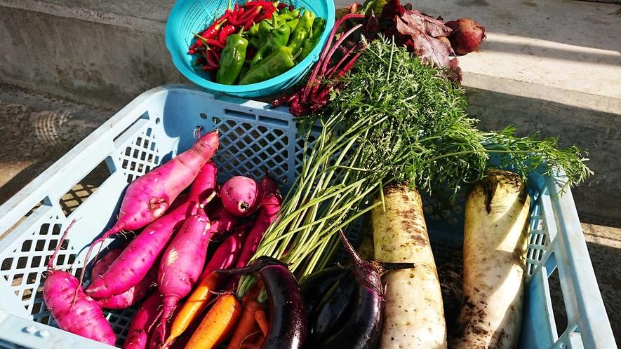 【自家栽培野菜】お食事には自家農園で採れた野菜も使用しております